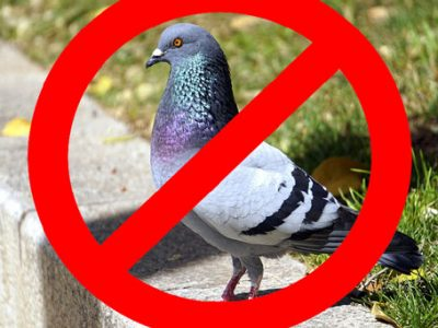 Mejores Formas de ahuyentar a las palomas